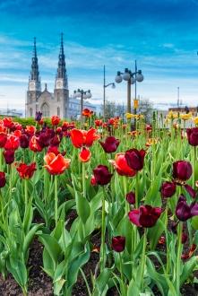 Festival des tulipes - Ottawa