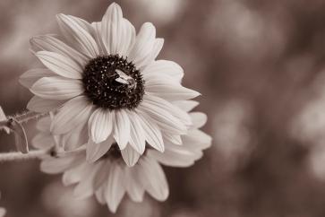 Quand les fleurs ont envahi les prés